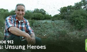 Episode 912-Bats: Unsung Heroes for Gardeners and Growers