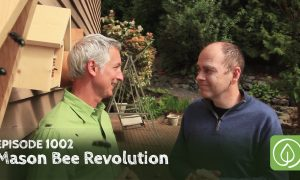 Episode 1002-Mason Bee Revolution: How the Hardest Working Bee Can Save the World