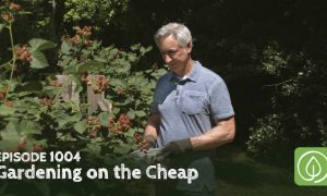 Episode 1004-Gardening on the Cheap: Top Tips for Saving Money and Time in the Garden