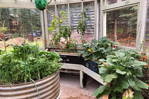 Alaskan garden greenhouse