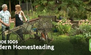 Episode 1005-Modern Homesteading: Transforming the Urban Experience One Garden at a Time