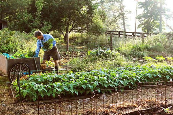 Hobby farming Phil Busman Cherith Farms