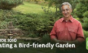 Episode 1010-Creating a Bird-friendly Garden, with Margaret Roach