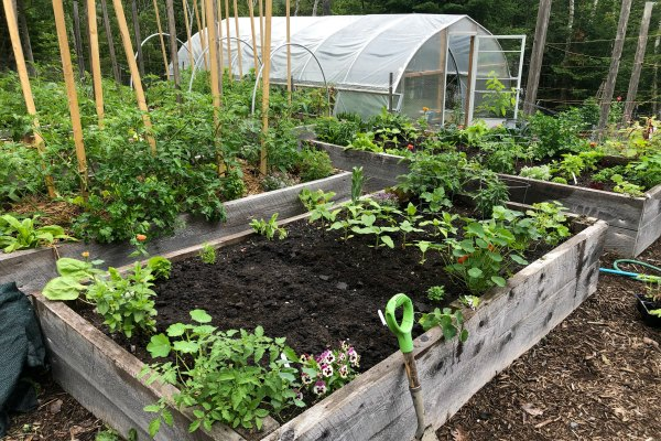 garden bed and polytunnel