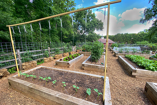 Cucumber trellis built at the GardenFarm