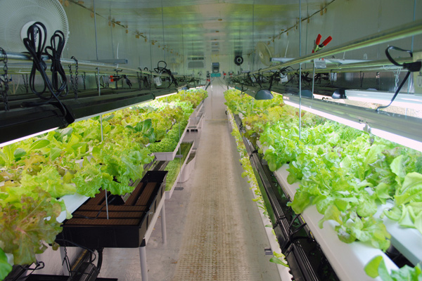 Urban gardening hydroponics