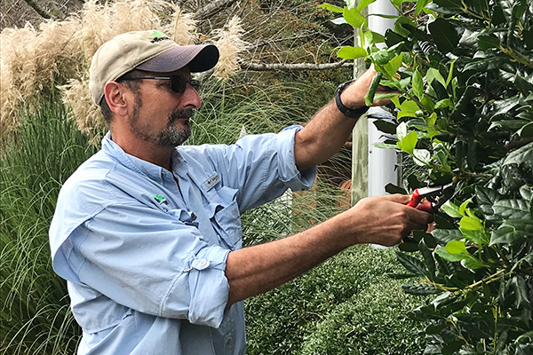 Rick Smith the Pruning Guru