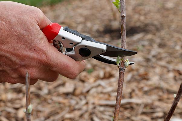 Bypass pruner