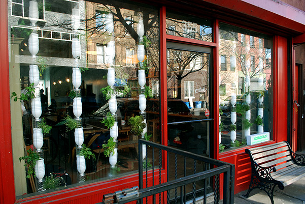 Urban gardening in windows